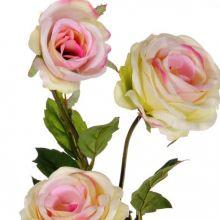 Rosa Pompetuse ramo con 3 fiori