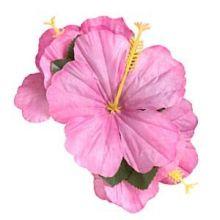 Cip per capelli fiori di Ibisco Mix colori (5 pz)